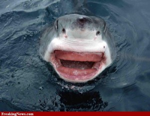 Jaws-with-No-Teeth--77263